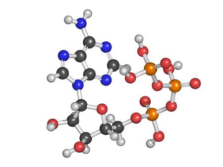 atp: Adenosine triphosphate (ATP) energy transport molecule, chemical structure. ATP is the main energy transport molecule in most organisms. Stock Photo