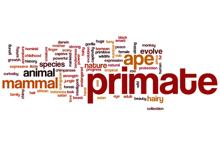 Primate word cloud concept photo