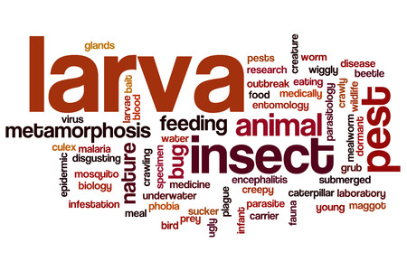 larva: Larva word cloud concept