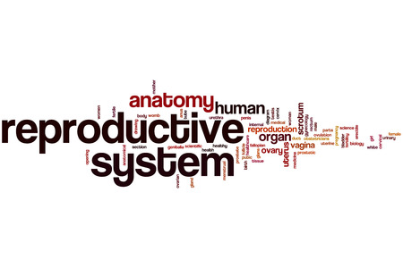 Reproductive system word cloud concept photo