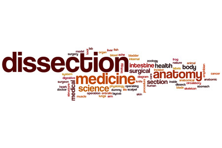 Dissection word cloud concept photo