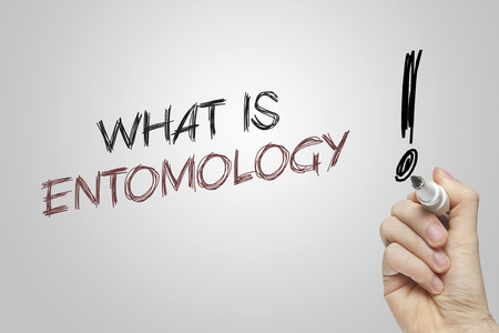entomology: Hand writing what is entomology on grey background