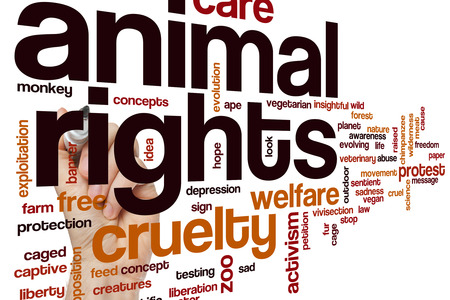 insightful: Animal rights word cloud concept