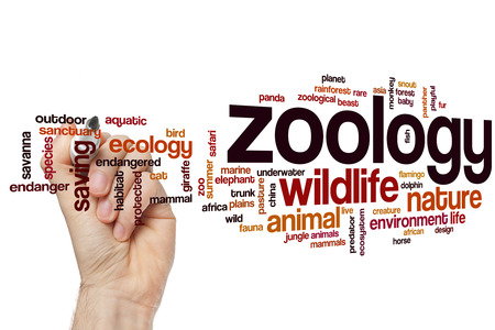 zoology: Zoology word cloud concept
