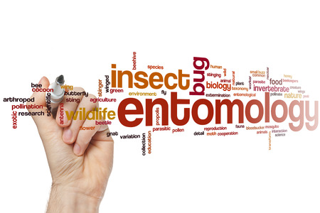 entomology: Entomology word cloud concept Stock Photo