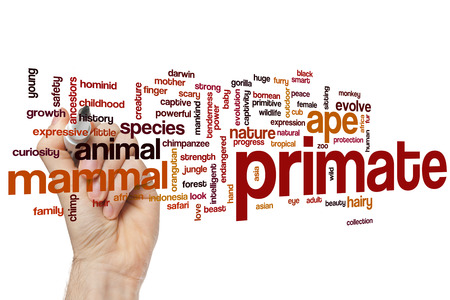 primate: Primate word cloud concept