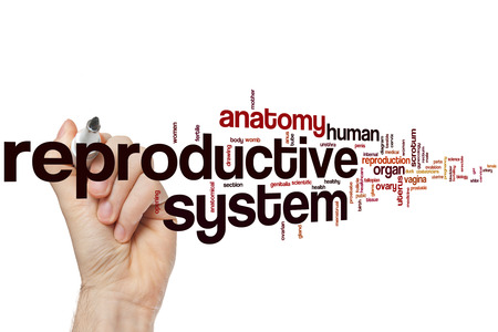 reproductive: Reproductive system word cloud concept Stock Photo