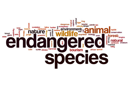 Endangered species word cloud