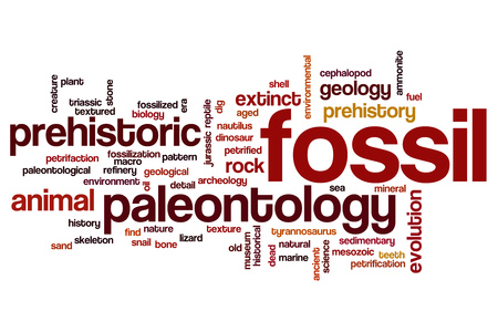 fossil: Fossil word cloud