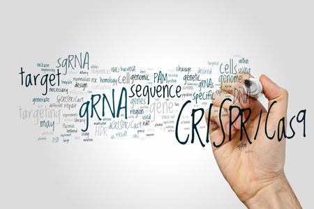 regulating: CRISPRCas9 system for editing, regulating and targeting genomes (biotechnology and genetic engineering) word cloud Stock Photo