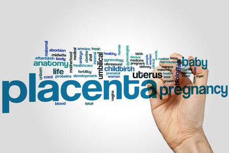 placenta: Placenta word cloud concept Stock Photo