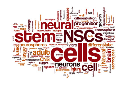 neural: Neural stem cells word cloud