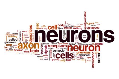 dendrites: Neurons word cloud