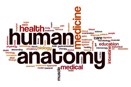 Human Anatomy Word Cloud Concept Stock Photo Picture And Royalty