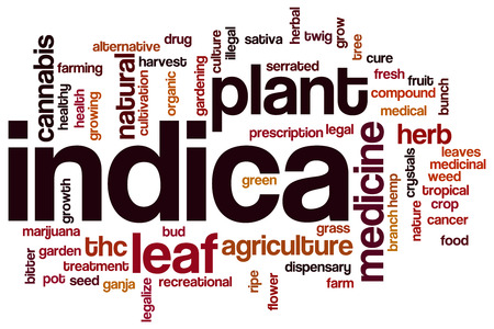 dispensary: Indica word cloud concept