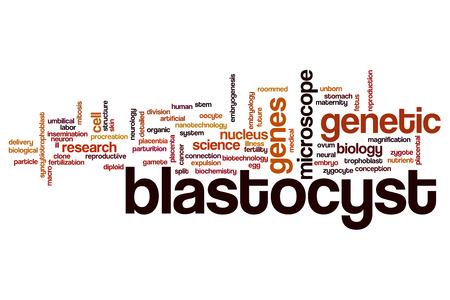 gamete: Blastocyst word cloud concept Stock Photo