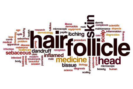 follicle: Hair follicle word cloud concept