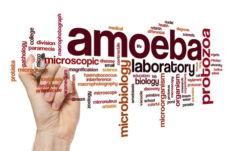 ameba: ameba palabra concepto de la nube Foto de archivo