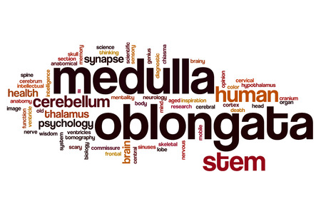 oblongata: Medulla oblongata word cloud concept Stock Photo