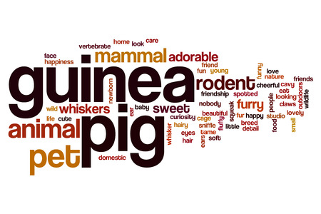Guinea pig word cloud concept