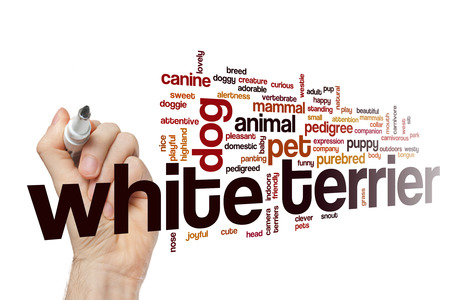 White terrier word cloud Stock Photo