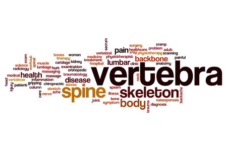 vertebra: Vertebra word cloud concept