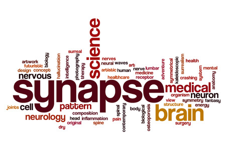 synapse: Synapse word cloud concept