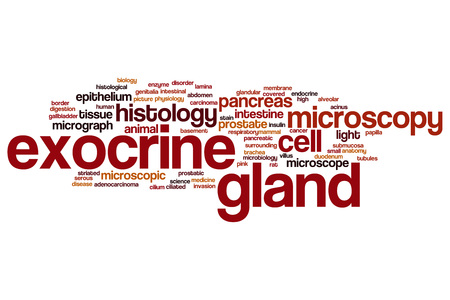 submucosa: Exocrine gland word cloud concept