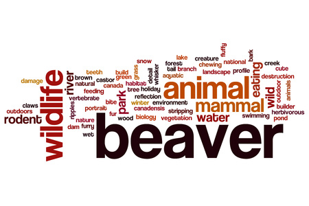 Beaver word cloud concept Stock Photo