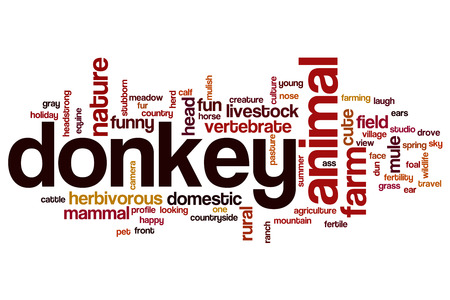 Donkey word cloud concept Stock Photo
