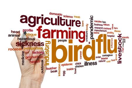 pandemic: Bird flu word cloud concept Stock Photo
