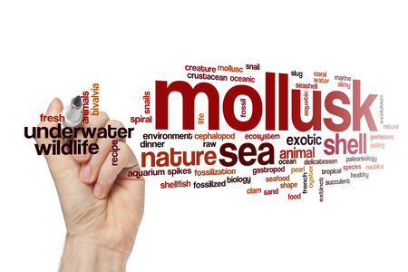 mollusk: Mollusk word cloud Stock Photo