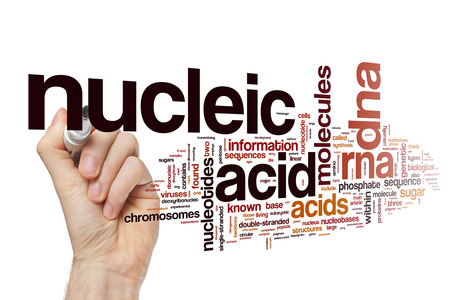 nucleic: Nucleic acid word cloud Stock Photo
