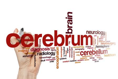 cerebrum: Cerebrum word cloud concept