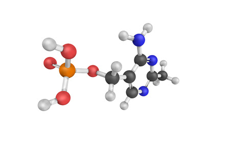 3d structure of HMP-P, also known as phosphomethylpyrimidine kinase, an enzyme that catalyzes the chemical reaction.