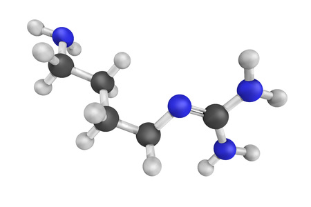 multiple targets: 3d structure of agmatine, also known as (4-aminobutyl)guanidine, a chemical substance which is naturally created from the chemical arginine. Exerts modulatory action at multiple molecular targets. Stock Photo