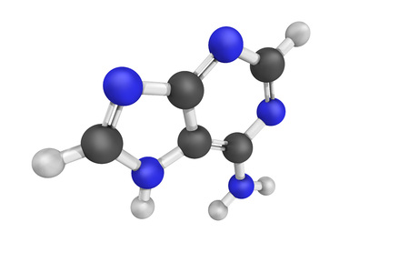 cofactor: 3d structure of Adenine. Its derivatives have a variety of roles in biochemistry, including cellular respiration. It also has functions in protein synthesis and as a chemical component of DNA and RNA.