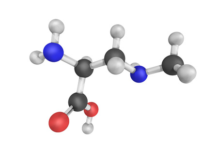 3d structure of beta-methylamino-L-alanine, a non-proteinogenic amino acid produced by cyanobacteria. BMAA is a neurotoxin and has a potential role in various neurodegenerative disorders.