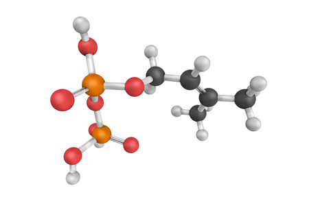 Dimethylallyl pyrophosphate, an intermediate product of both MVA pathway and DOXPMEP pathway which exists in virtually all life forms.