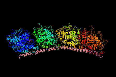 dysplasia: Alpha-tubulin 3C, a protein associated with the genetic diseases Clouston hidrotic ectodermal dysplasia and Kabuki syndrome. 3d rendering.