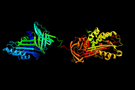 SerpinB1, a cytoplasmic serine protease inhibitor of polymorphonuclear neutrophils. Specifically inhibits neutrophil elastase. 3d rendering.
