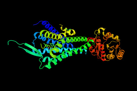 Hypocretin (orexin) receptor 2, a G-protein coupled receptor expressed exclusively in the brain. Involved in the central feedback mechanism that regulates feeding behaviour. Banco de Imagens - 71495323