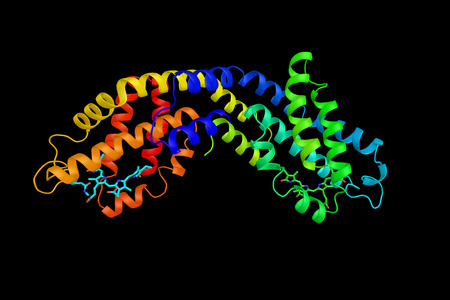 Phycocyanin, a pigment-protein complex from the light-harvesting phycobiliprotein family. An accessory pigment to chlorophyll. 3d rendering.