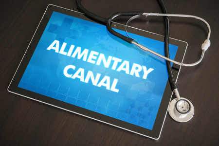 alimentary canal: Alimentary canal (gastrointestinal disease related) diagnosis medical concept on tablet screen with stethoscope. Stock Photo