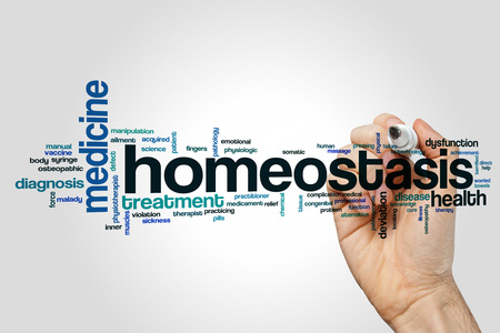 homeostasis: Homeostasis word cloud concept on grey background