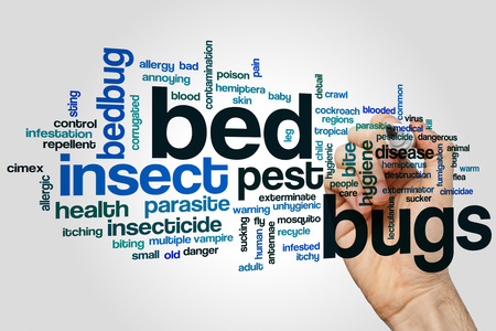 Bed bugs word cloud concept on grey background. Stock Photo