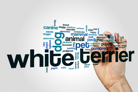 White terrier word cloud on grey background