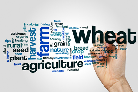 Wheat word cloud concept on grey background
