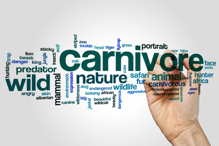 Carnivore word cloud concept on grey background.