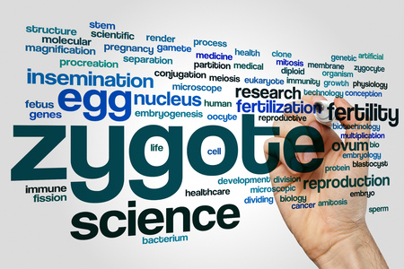 Zygote word cloud concept on grey background Stock Photo